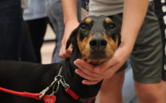 Palmetto Welcomes Therapy Dogs