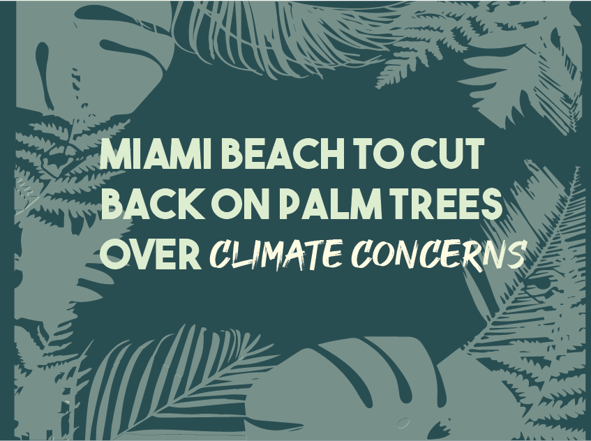 Miami Beach to Cut Back on Palm Trees Over Climate Concerns